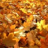love-lonely-autumn-leaves-31000